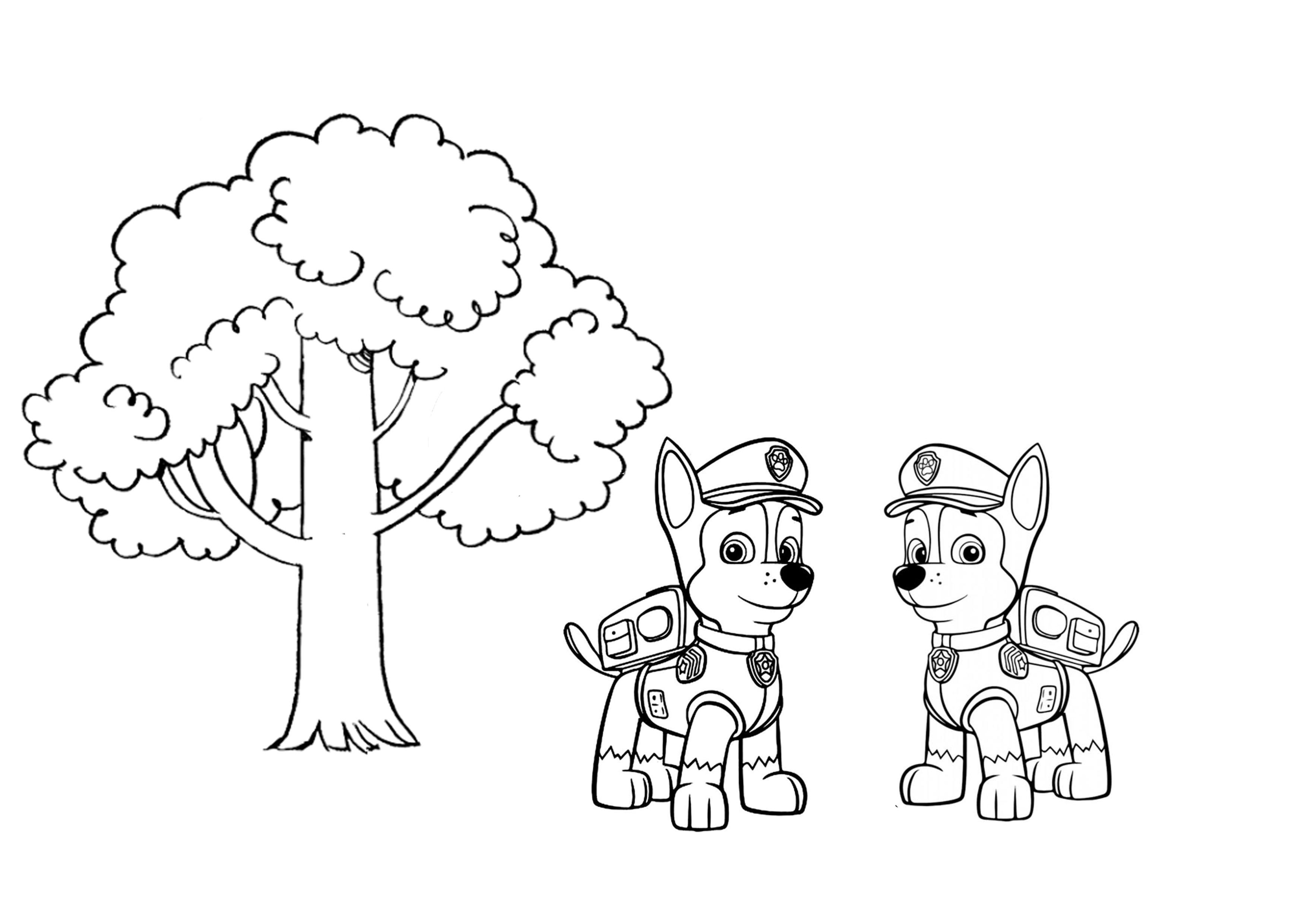 Kolorowanka Psi Patrol: Chase – drzewo